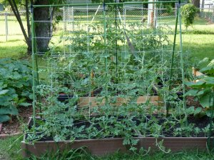 trellis system for vining plants