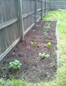 2010 garden at planting