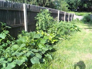 2010 Garden July 27th