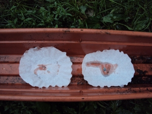 Window box with coffee filters covering drainage holes