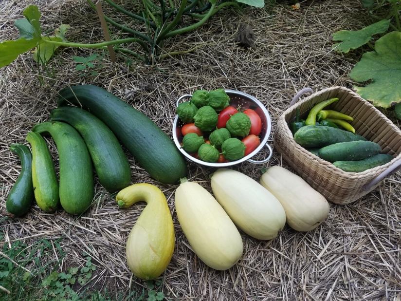 August 5, 2018 harvest haul