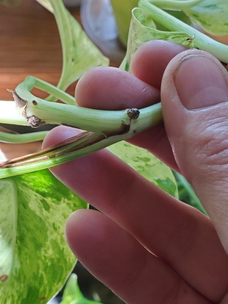 Showing the what the node looks like on a pothos